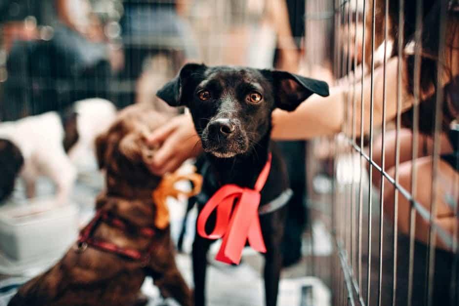 ribbon danger for dogs