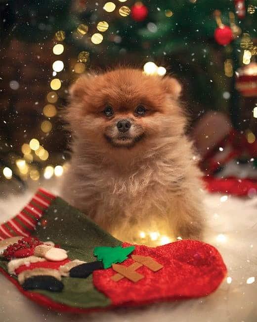 salt-dough ornaments danger for dogs