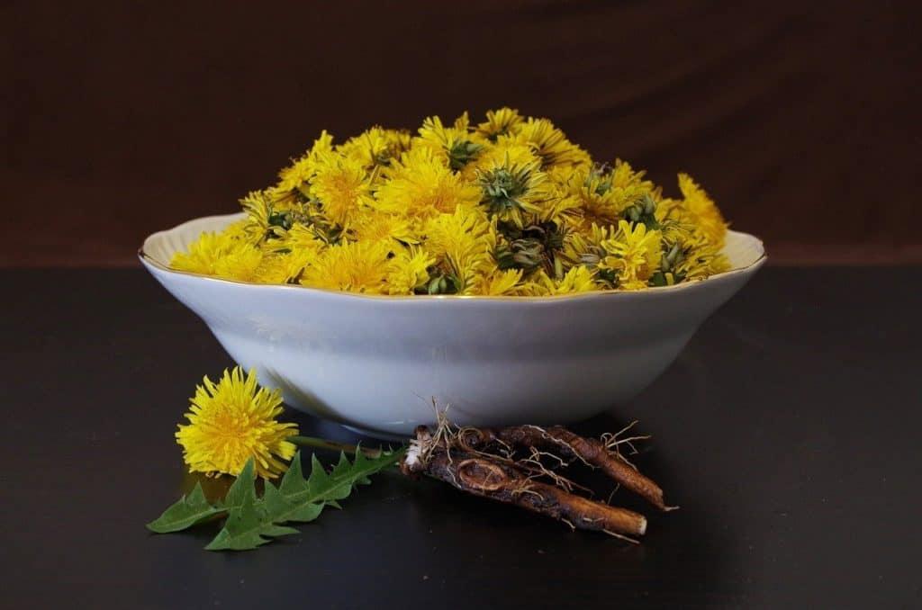 dandelion for cleansing